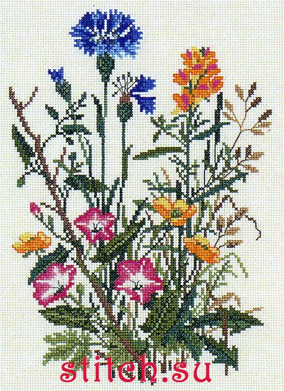 """Купить  """"Пастушья сумка """" от Eva Rosenstand - Цветы от Eva Rosenstand..."""