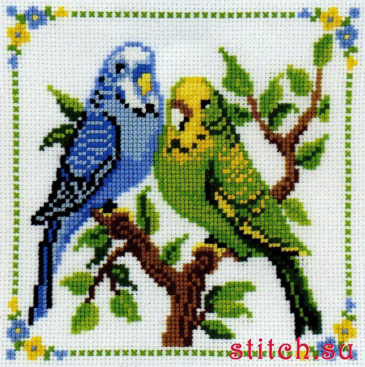 Вышивка крестом волнистые попугайчики 89