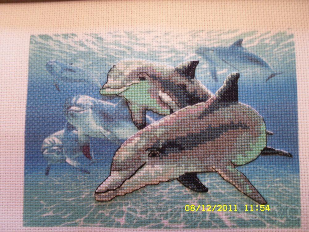 управлять дельфины от дименшенс картинки живут