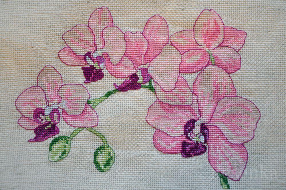 Рисунок для вышивки орхидеи 3