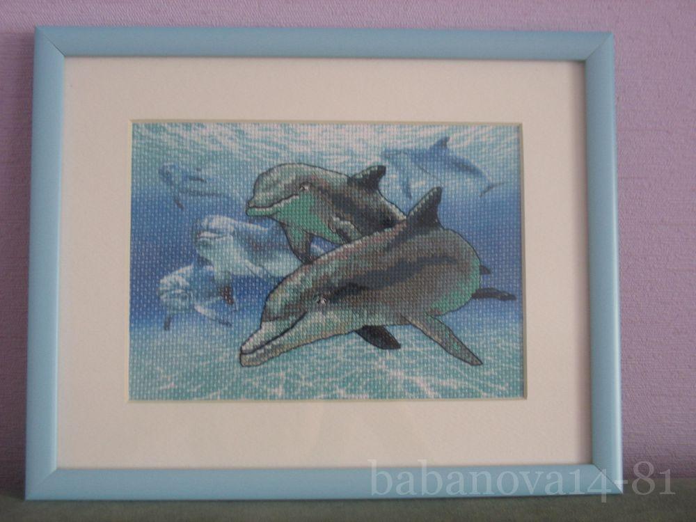 сожалению, дельфины от дименшенс картинки головной