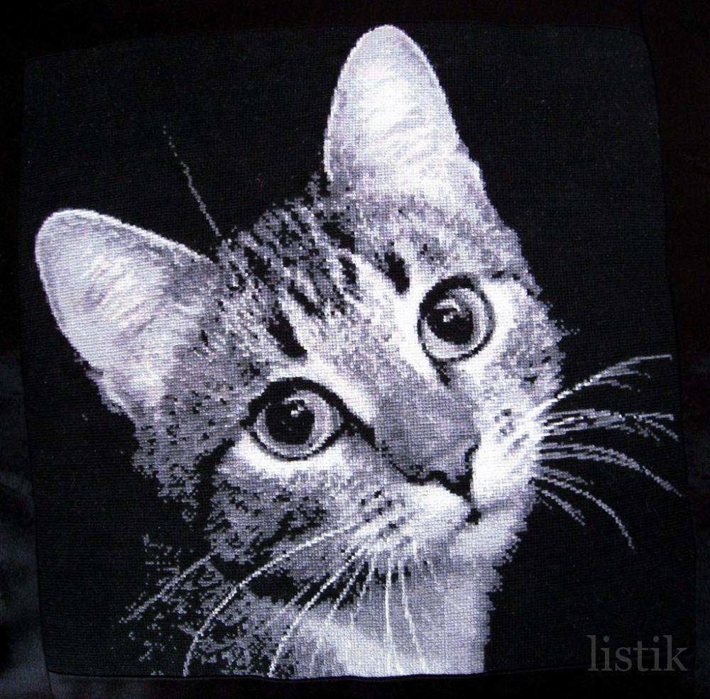 Грустный котенок.  Животные.  Нажмите на изображение для просмотра.